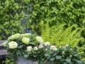Infinity Evergreen