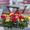 Roses Forever mix 1.jpg
