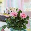 Roses Forever party 3.jpg