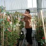 Rosa i væksthuset i Dyreborg. Her har Rosa udviklet nye skønne roser i over 18 år